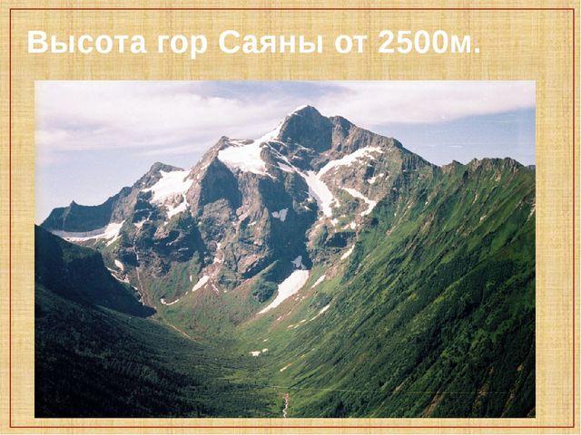 Высота гор Саяны от 2500м.