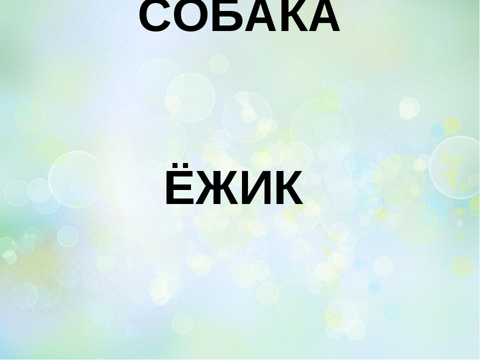 СОБАКА ЁЖИК