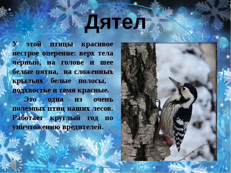 Дятел У этой птицы красивое пестрое оперение: верх тела чёрный, на голове и ш...