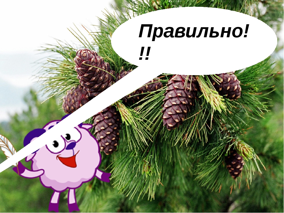 Скарабей – это… птица жук грызун растение Следующее задание