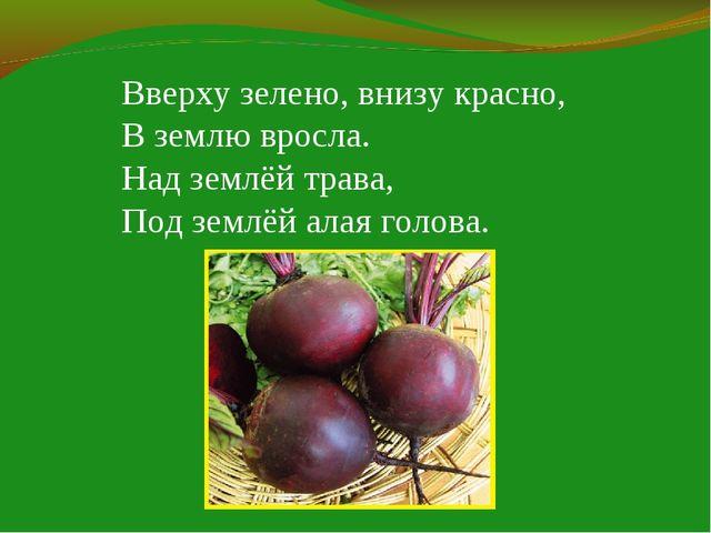Вверху зелено, внизу красно, В землю вросла. Над землёй трава, Под землёй ала...