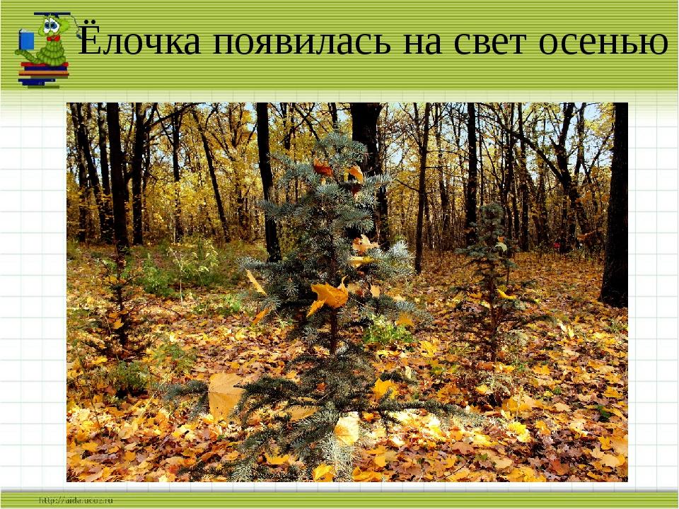 Ёлочка появилась на свет осенью