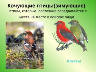 Кочующие птицы(зимующие) - птицы, которые постоянно передвигаются с места на