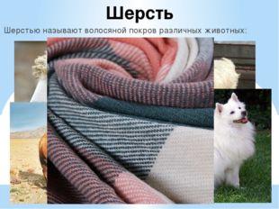 Шерсть Шерстью называют волосяной покров различных животных: