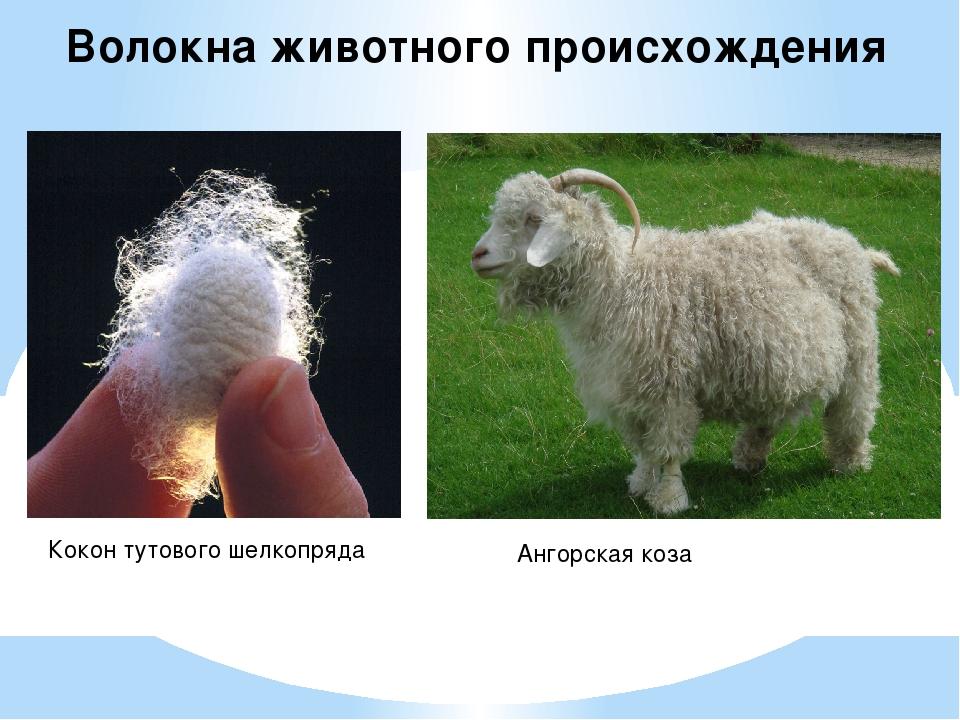 Волокна животного происхождения Кокон тутового шелкопряда Ангорская коза