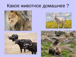 Какое животное домашнее ?
