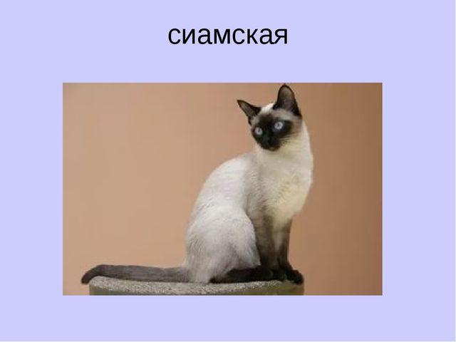 сиамская