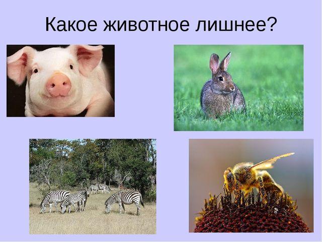 Какое животное лишнее?