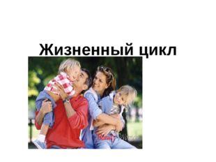 Жизненный цикл семьи