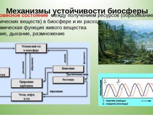 5. Равновесное состояние между получением ресурсов (образованием органических