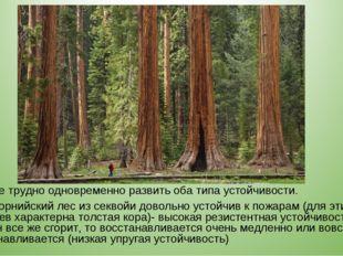 системе трудно одновременно развить оба типа устойчивости. калифорнийский лес
