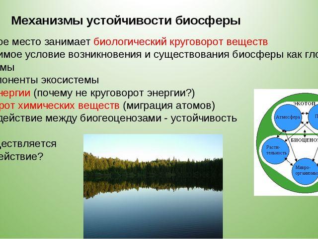 Механизмы устойчивости биосферы 2. Главное место занимает биологический круго...