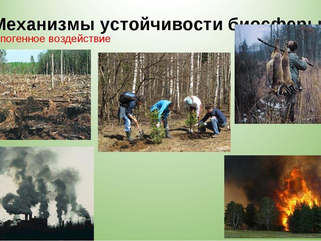 Механизмы устойчивости биосферы 7. Антропогенное воздействие