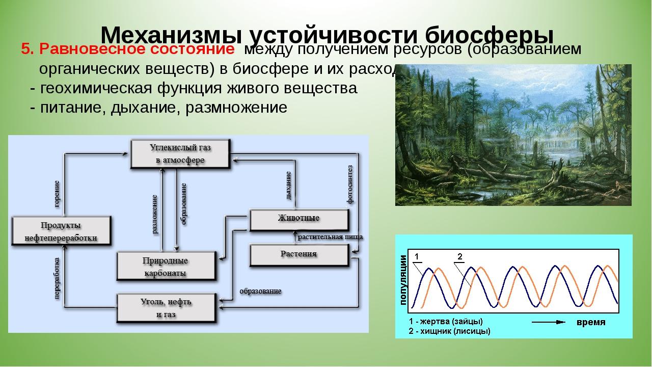 5. Равновесное состояние между получением ресурсов (образованием органических...