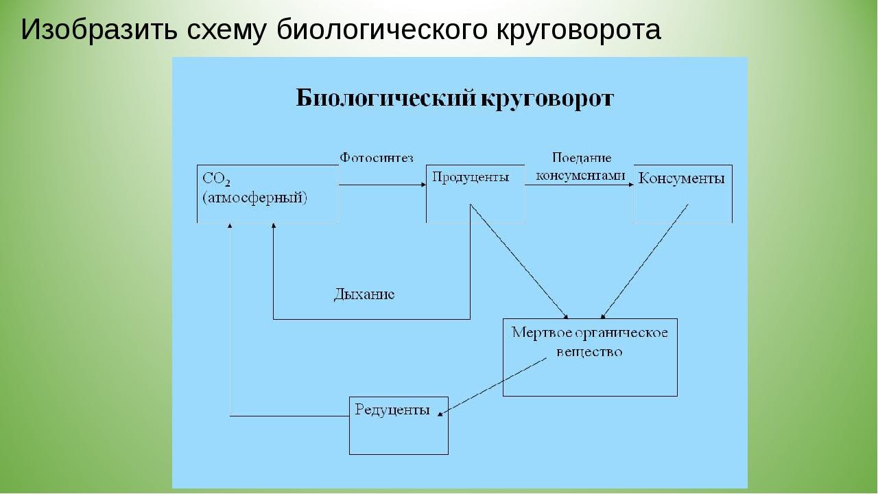 Изобразить схему биологического круговорота