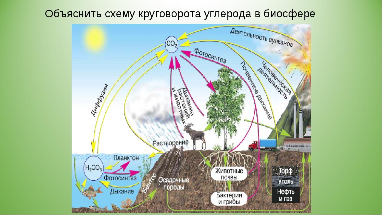 Объяснить схему круговорота углерода в биосфере