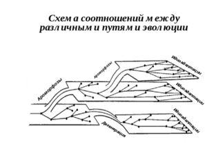 Схема соотношений между различными путями эволюции Ароморфозы Ароморфозы Идио