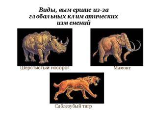 Виды, вымершие из-за глобальных климатических изменений Шерстистый носорог Ма