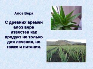Алоэ Вера С древних времен алоэ вера известен как продукт не только для лечен
