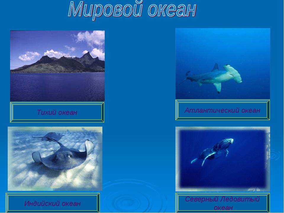 Атлантический океан Индийский океан Северный Ледовитый океан Тихий океан