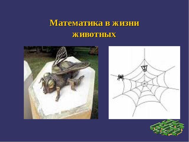 Математика в жизни животных