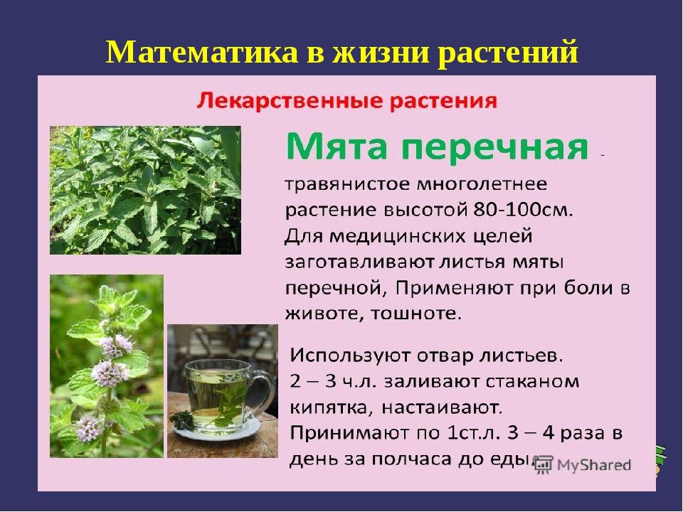 Математика в жизни растений