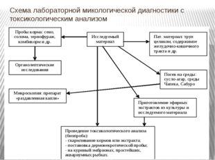 Схема лабораторной микологической диагностики с токсикологическим анализом
