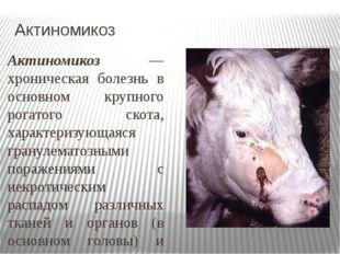 Актиномикоз Актиномикоз — хроническая болезнь в основном крупного рогатого ск