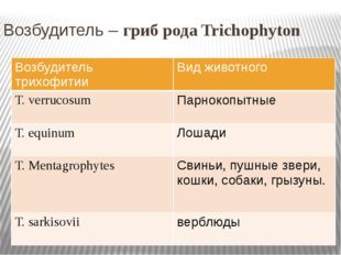 Возбудитель – гриб рода Trichophyton Возбудитель трихофитии Вид животного Т.v