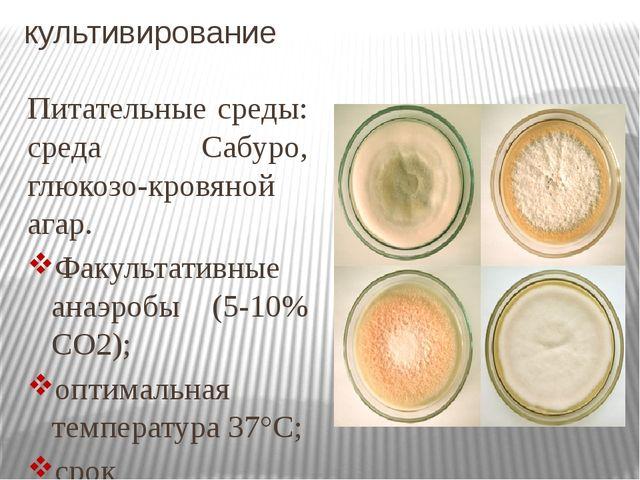 культивирование Питательные среды: среда Сабуро, глюкозо-кровяной агар. Факул...