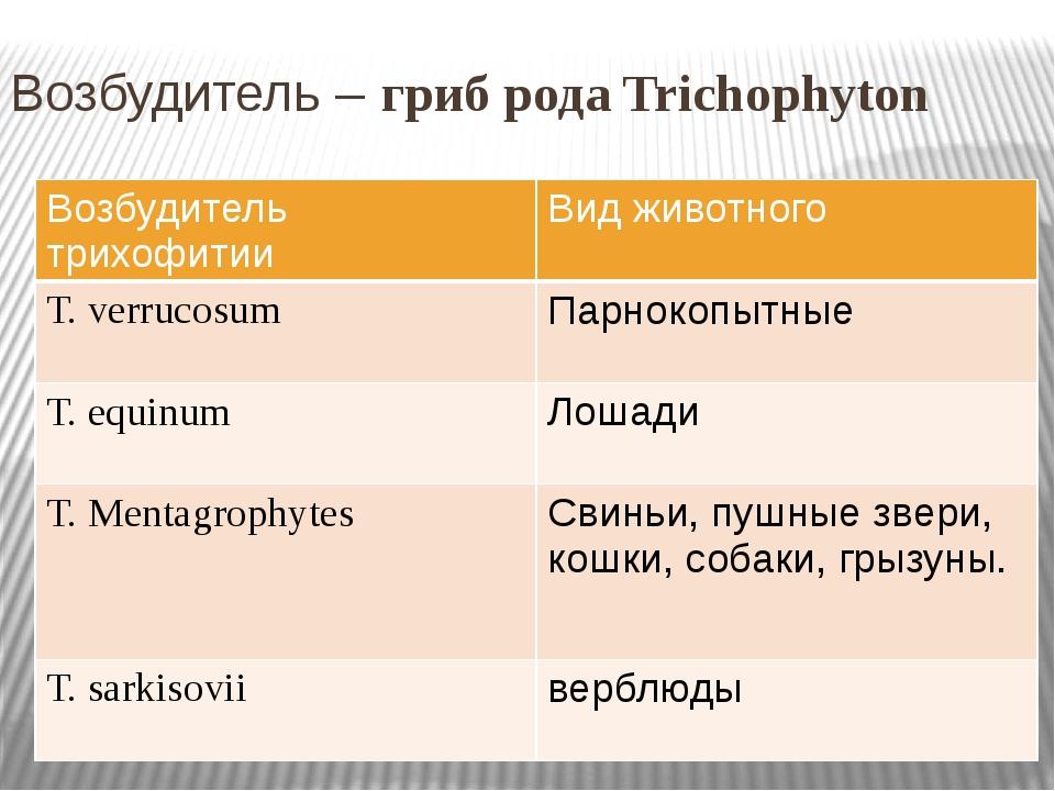 Возбудитель – гриб рода Trichophyton Возбудитель трихофитии Вид животного Т.v...
