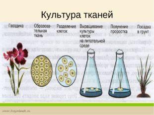 Культура тканей