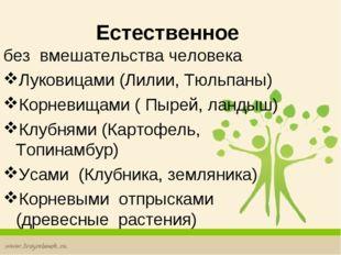 Естественное без вмешательства человека Луковицами (Лилии, Тюльпаны) Корнев