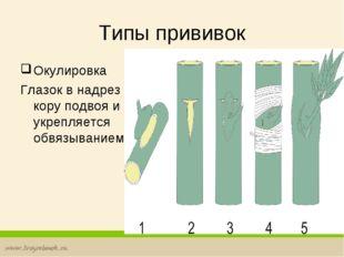Типы прививок Окулировка Глазок в надрез под кору подвоя и укрепляется обвязы