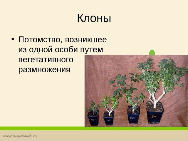 Клоны Потомство, возникшее из одной особи путем вегетативного размножения