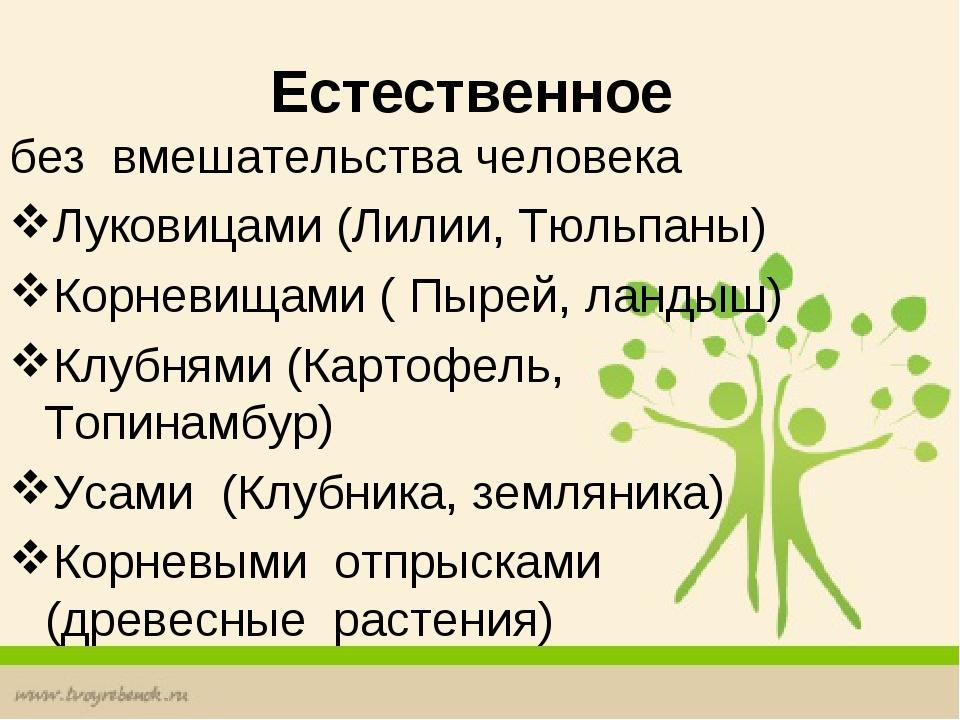Естественное без вмешательства человека Луковицами (Лилии, Тюльпаны) Корнев...