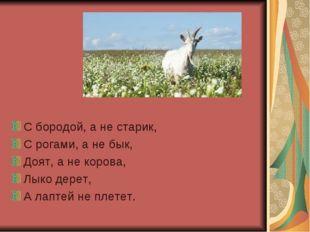 С бородой, а не старик, С рогами, а не бык, Доят, а не корова, Лыко дерет, А