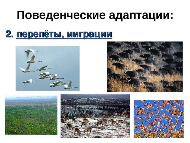 Поведенческие адаптации: 2. перелёты, миграции
