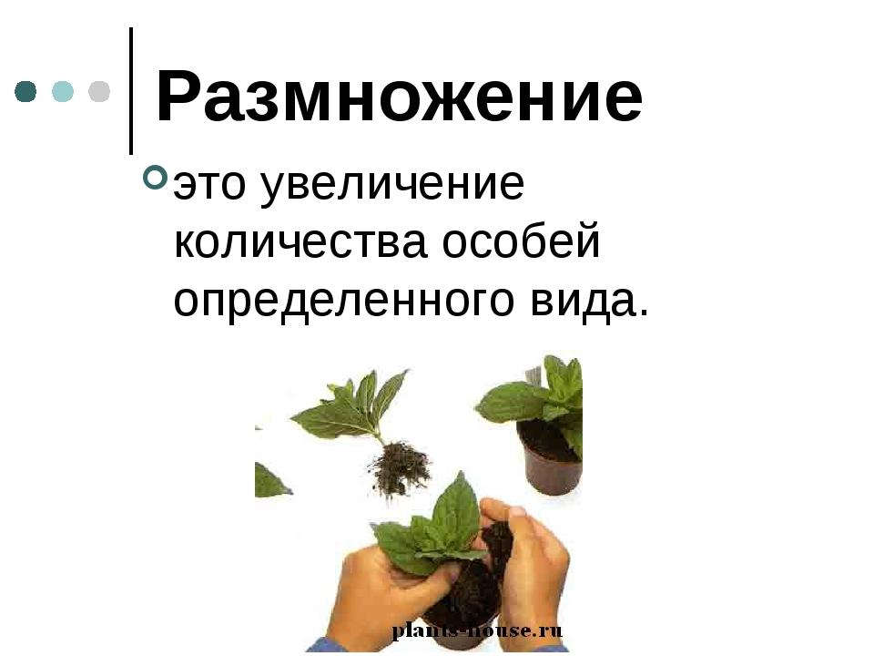 Размножение это увеличение количества особей определенного вида.