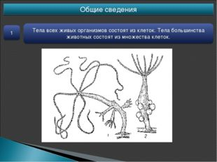 Общие сведения 1 Тела всех живых организмов состоят из клеток. Тела большинст