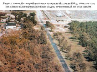 . Рядом с атомной станцией находился прекрасный сосновый бор, но после того,