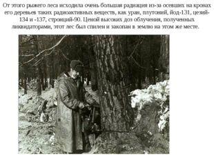 От этого рыжего леса исходила очень большая радиация из-за осевших на кронах