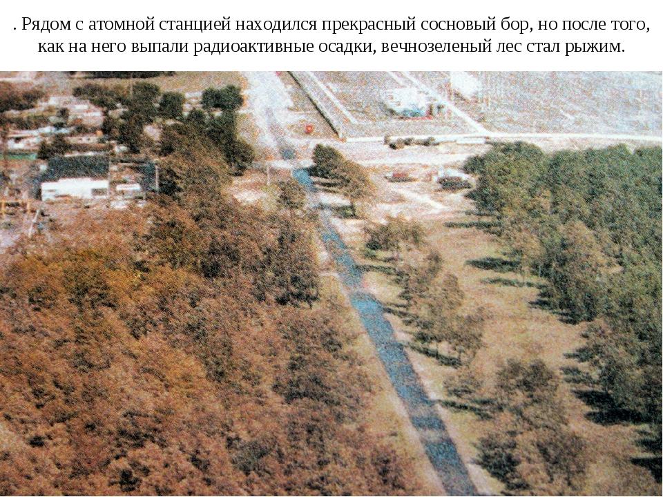 . Рядом с атомной станцией находился прекрасный сосновый бор, но после того,...