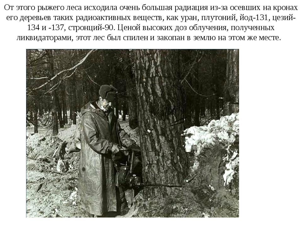 От этого рыжего леса исходила очень большая радиация из-за осевших на кронах...