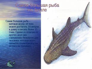 Самая большая рыба – китовая акула: её тело может достигать 18 метров в длину