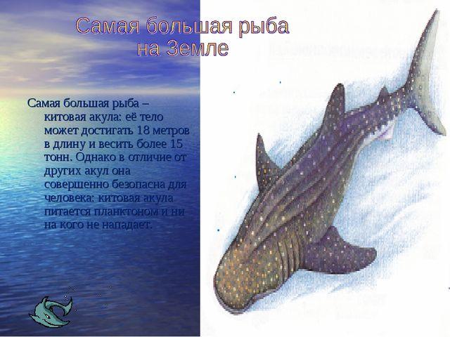 Самая большая рыба – китовая акула: её тело может достигать 18 метров в длину...
