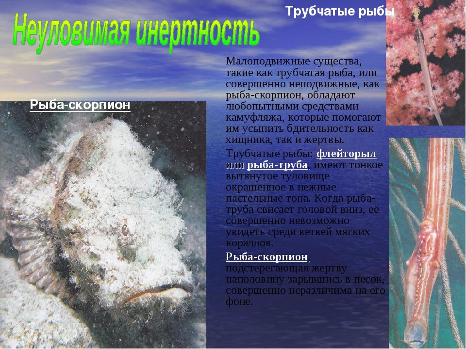 Малоподвижные существа, такие как трубчатая рыба, или совершенно неподвижные...