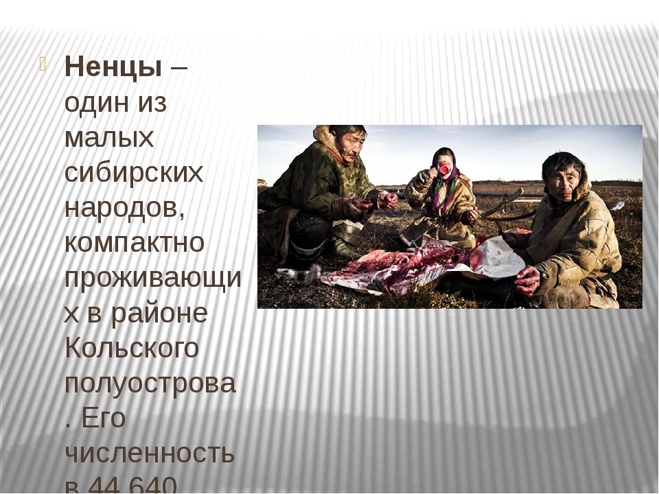 Ненцы– один из малых сибирских народов, компактно проживающих в районе Коль...