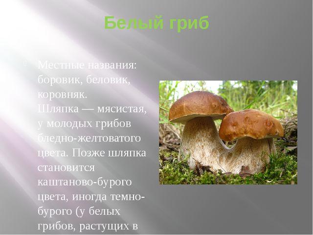 Белый гриб Местные названия: боровик, беловик, коровняк. Шляпка — мясистая, у...