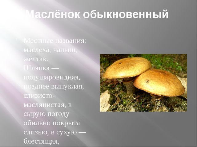 Маслёнок обыкновенный Местные названия: маслеха, чалыш, желтак. Шляпка — полу...